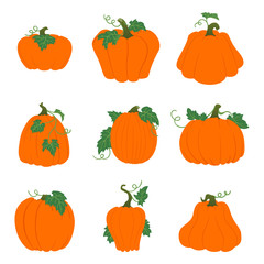Set of simple orange pumpkins with leaves and vines. Isolated on white background. Different shapes.