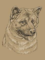 Monochrome American akita vector hand drawing portrait