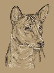 Monochrome Basenji vector hand drawing portrait