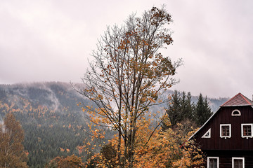 Fog and mist over the pine mountain forest with traditional old village house and a faded tree in autumn.