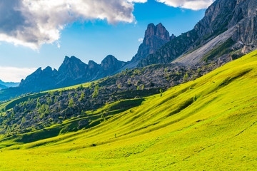 View of the field of yellow flowers and rocky hill on the Dolomites mountain