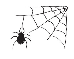 Spider web Hand drawn sketched web vector illustration isolated on white background
