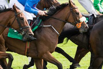 Close up on race horses and jockeys galloping
