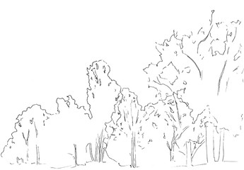 Trees and bushes sketch. Landscape linear drawing. Hand drawn illustration. Forest on white background. Black Line style design. Wild nature.