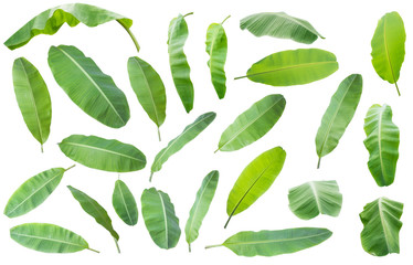banana leaf.Isolated on white background with clipping path.
