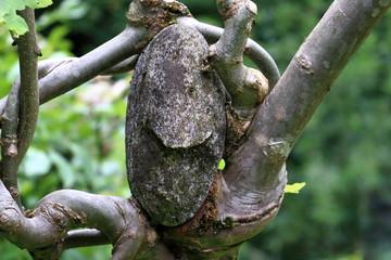 Pietra nell'albero