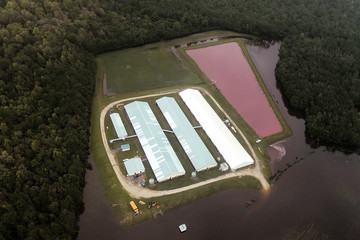 Aerial view of a pig farm after the passing of Hurricane Florence, now downgraded to a tropical depression in Eastern North Carolina