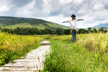 Rice field with scarecrow. Landscape view green tone make a filling fresh of Thailand.