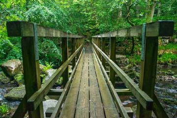 Kładka w lesie Yorkshire