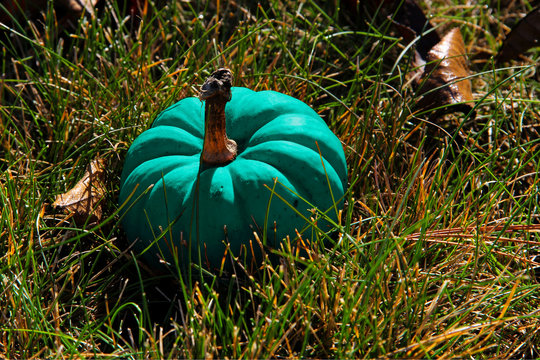 Teal Pumpkins Signify Food-Allergy-Safe Treats for Halloween (Please note that it's The Teal Pumpkin Project - not turquoise)