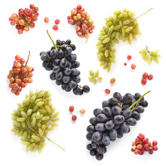 Branches of different varieties of grapes isolated on white background, top view.
