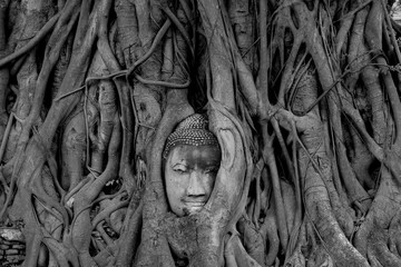 Black and White head of Buddha image in tree roots at Wat Mahathat temple, Ayutthaya, Thailand Wall mural