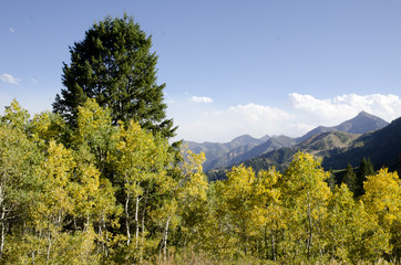 Fall,mountains,sky,leaves,pine trees,yellow,blue,green,clouds,view