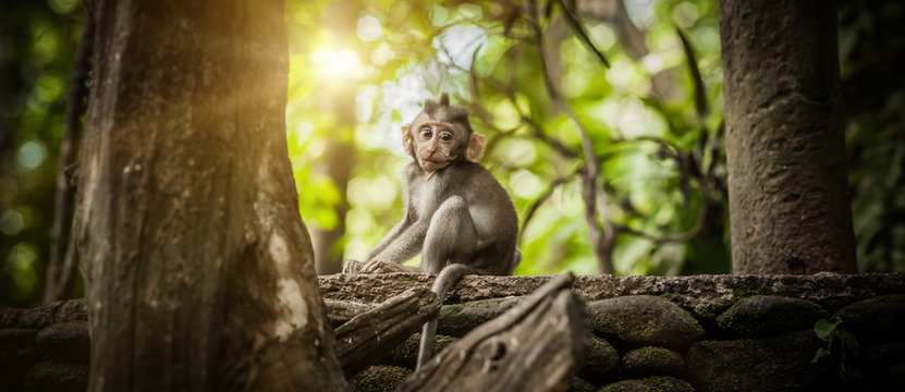 Adorable little baby macaque monkey at Sacred Monkey Forest