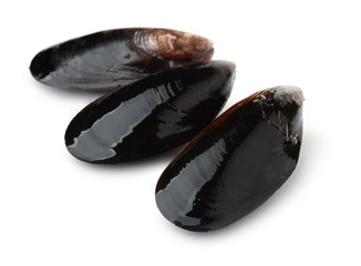 Three black whole shell mussels