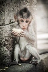 Beautiful view of a baby monkey eating some food