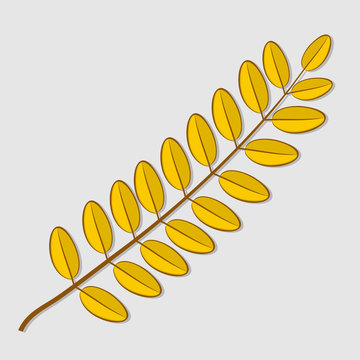 Acacia autumn leaf isolated on a white background. Flat design Vector illustration