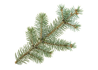 Fir tree branch isolated on white background. Pine branch. Christmas.