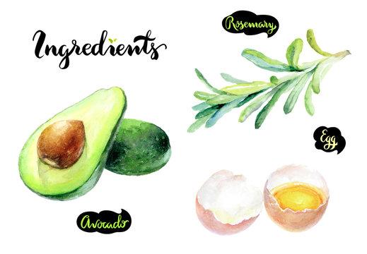 Avocado egg rosemary watercolor hand drawn illustration set