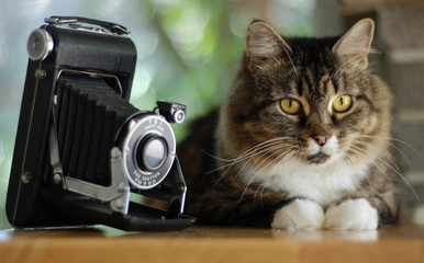 Tabby with Antique Camera 2