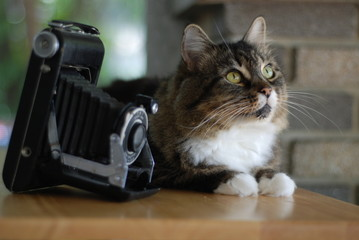 Tabby with Antique Camera 1