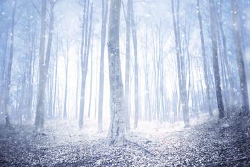Magical winter season snowy foggy forest.