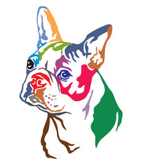 Colorful decorative portrait of Dog Boston terrier vector illustration