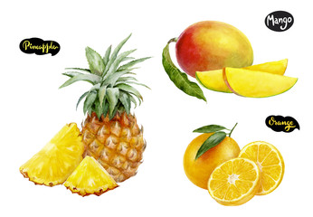 orange pineapple mango watercolor hand drawn illustration set