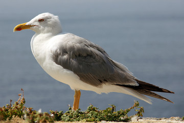 white and grey seagull under summer sun