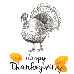 Hand drawn vector illustration of turkey to a Thanksgiving holiday.