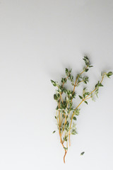 Close-up of thyme