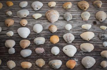 Seashells on wooden table, Florida, United States