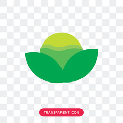Lettuce vector icon isolated on transparent background, Lettuce logo design