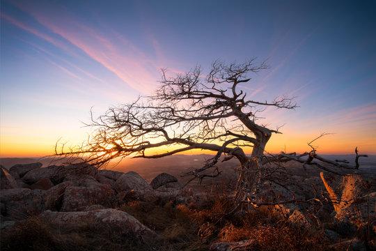 Wind shaped tree at sunset atop Oklahoma's Mount Scott