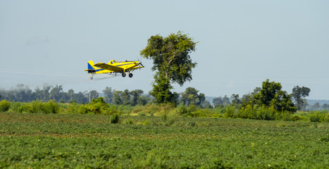 A Yellow Crop Duster Flies over the Fields Spreading Chemicals