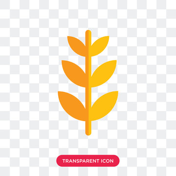 Wheat vector icon isolated on transparent background, Wheat logo design