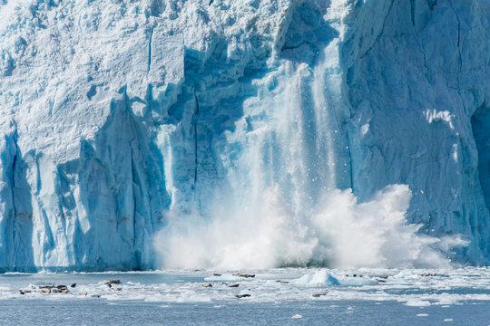 An Actively Calving Glacier in Gulf of Alaska