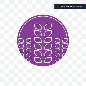 lavender vector icon isolated on transparent background, lavender logo design
