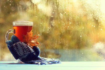 warming drink with autumn mood/ transparent mug with tea, and maple leaf, wrapped in a scarf on the background of the window after the rain