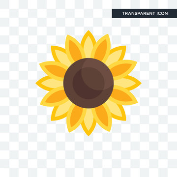 Sunflower vector icon isolated on transparent background, Sunflower logo design