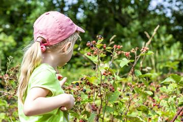 Little girl picking fresh wild raspberries in field in Denmark - Europe