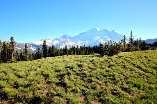Summer near Mount Rainier