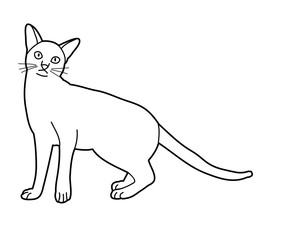 cat sketch on white background