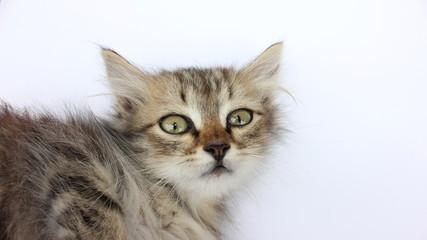 Kitten stares amazedly