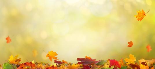 Autumn maple leaves .Beautiful autumn landscape with �olorful foliage. Falling leaves natural background