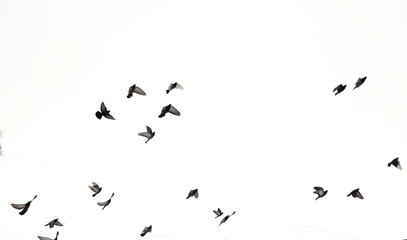 Birds fly in the sky