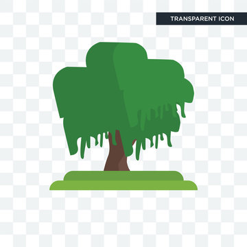 Black Willow tree vector icon isolated on transparent background, Black Willow tree logo design