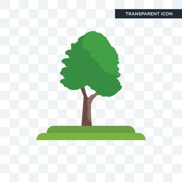 Pin Cherry tree vector icon isolated on transparent background, Pin Cherry tree logo design