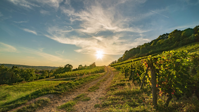 Sur le chemin des vignes du bugey