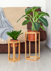 Leisure, lifestyle, domestic life concept. Vertical photo of simple, minimal, wooden shelf construction frame for two green plant flower stand in house near sofa against soft new couch